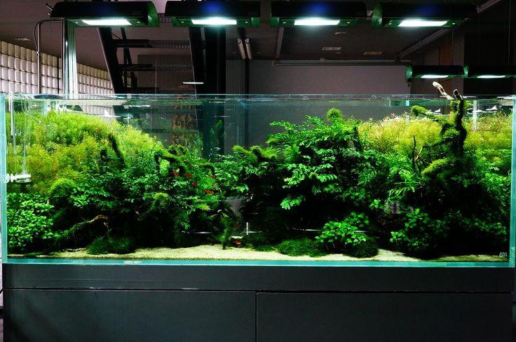 Nature Aquarium Gallery Aquascaping Pinterest