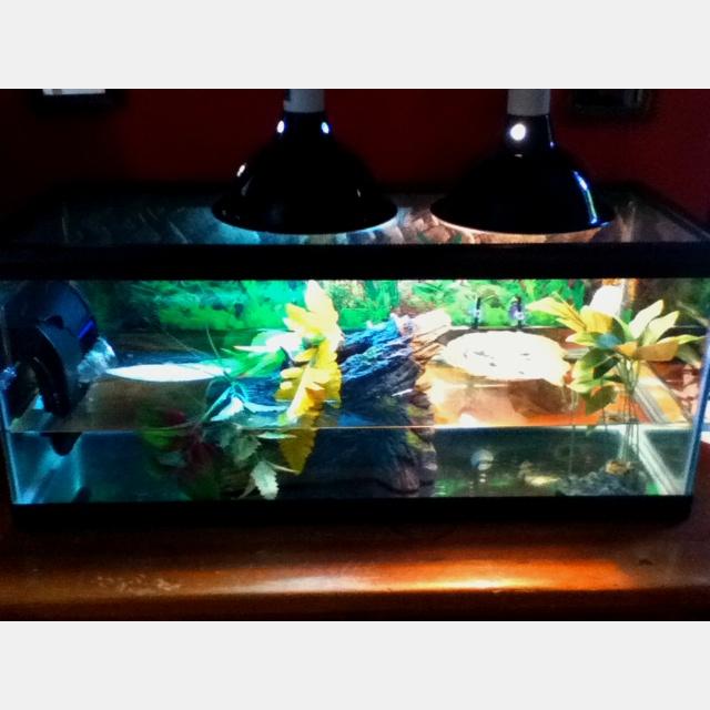 Turtle aquarium Artful OCD Pinterest