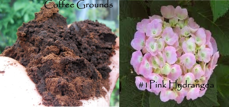 what plants love coffee grounds