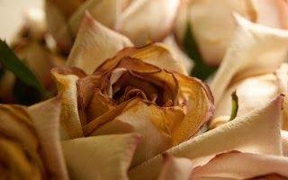 wallpapers of flowers Flowers HD 4 DESKTOP WALLPAPERS 1920×1080 For Wind | 320 x 200 · 11 kB · jpeg