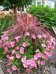annual flower pot ideas - Google Search