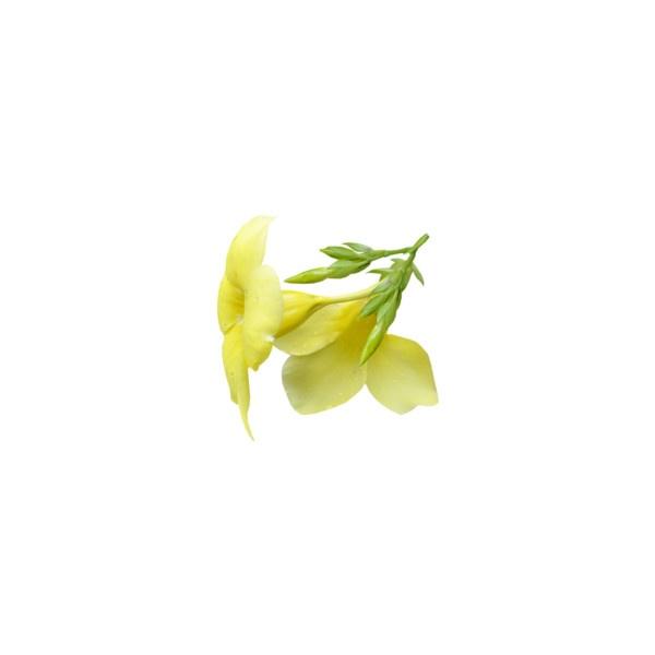 Цветы flower желтые цветы liked on polyvore