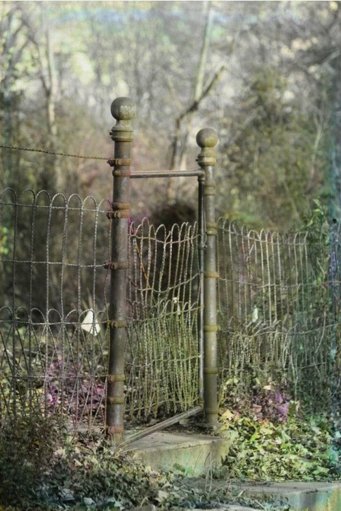 garden gate and fencing.