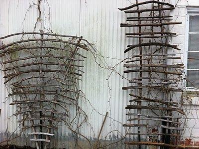 driftwood arbors