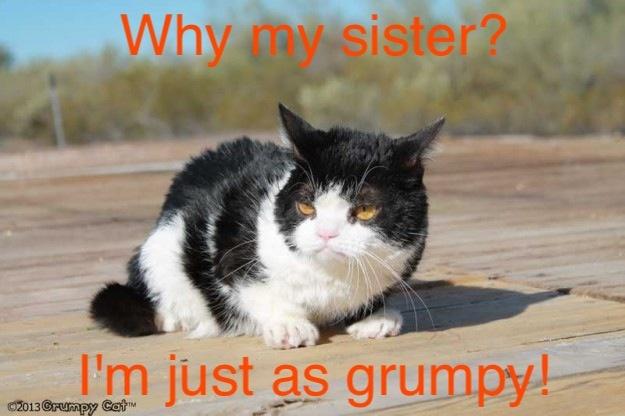 siblings grumpy cat pinterest