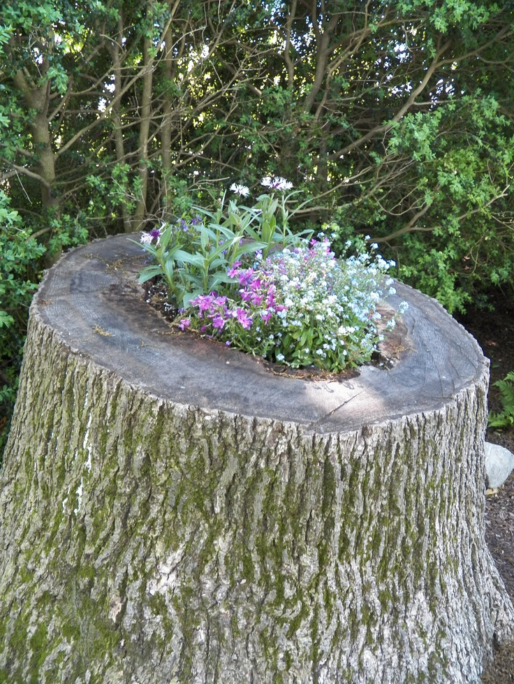 One way to use that tree stump diy pinterest for Tree trunk uses