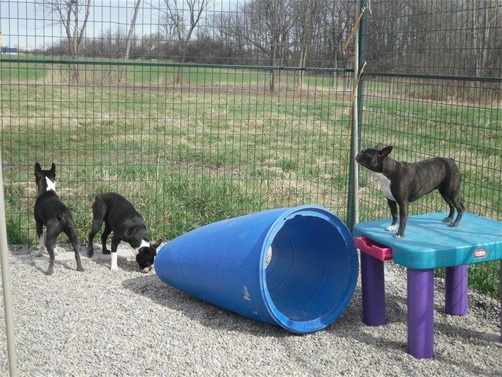Dog Play Area In Backyard :  wwwhouzzcomprojects190865ChildrenandDogBackyardPlayArea