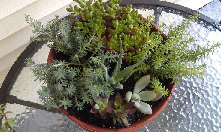 Succulent dish garden outdoors Pinterest