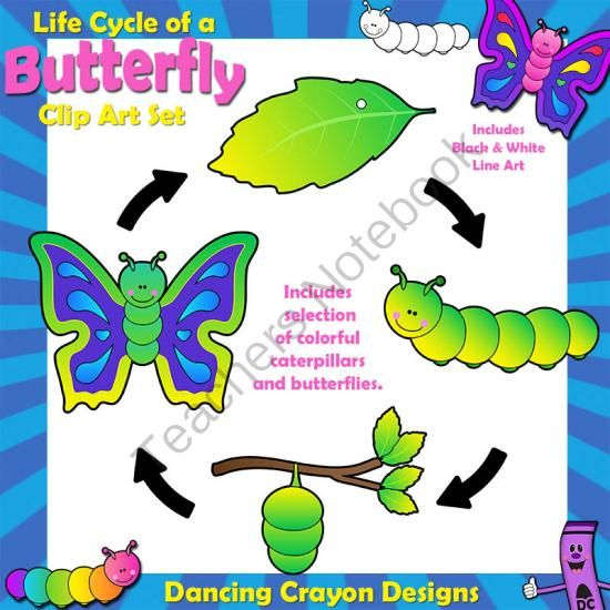 ... pages) - Colorful clip art of the caterpillar / butterfly life cycle