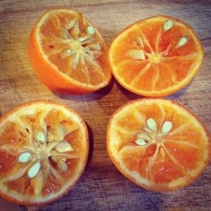Rangpur limes - why so seedy? | Farmers' Market Finds | Pinterest