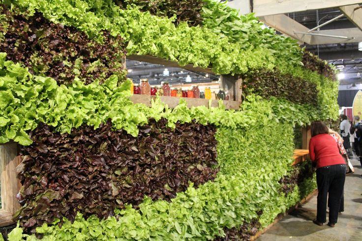 Lettuce Wall Freedom Garden Pinterest