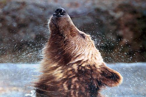 Shake it Bear.