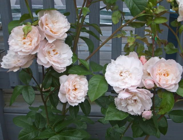 Generous Gardener Garden Pinterest