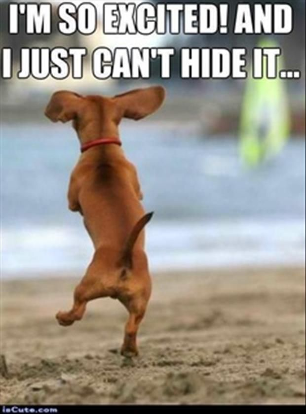 I M So Excited Funny Meme : I m so excited just can t hide it funny dogs cute