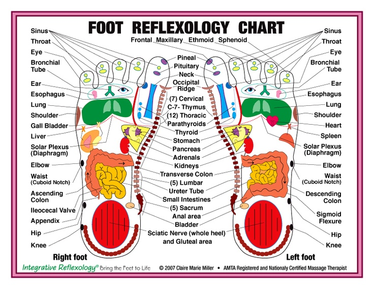 Hilaire image in printable reflexology foot chart