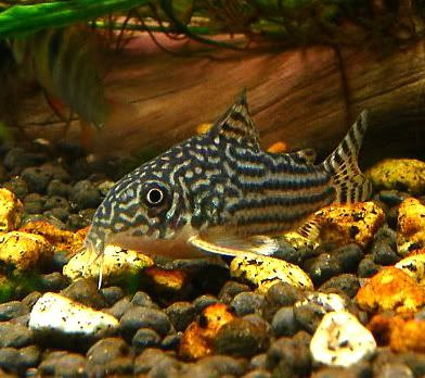 Sterbas Cory. These guys always look so busy. I imagine they think ...
