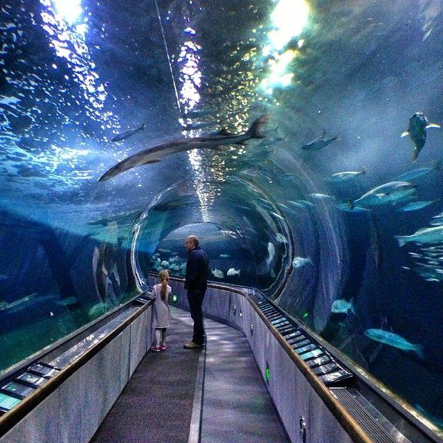 Aquarium Of The Bay San Francisco T R A V E L