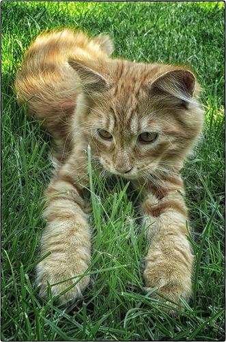 Redhead cutie, posted by shcherbyk via www.fotki.yandex.ru