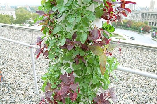Garden Up Plant Towers Make it Easy to Grown Your Own
