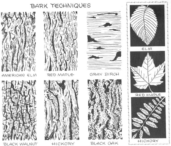 how to draw types of leaves