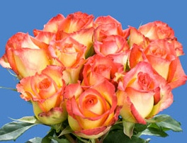 Yellow Roses with Pink Tips | Wedding Flowers | Pinterest