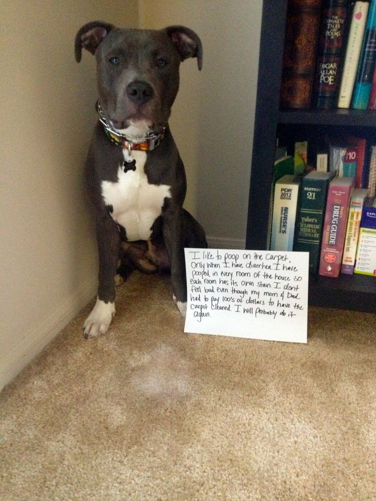 Pin by Dog Shame on Dog Shame | Pinterest