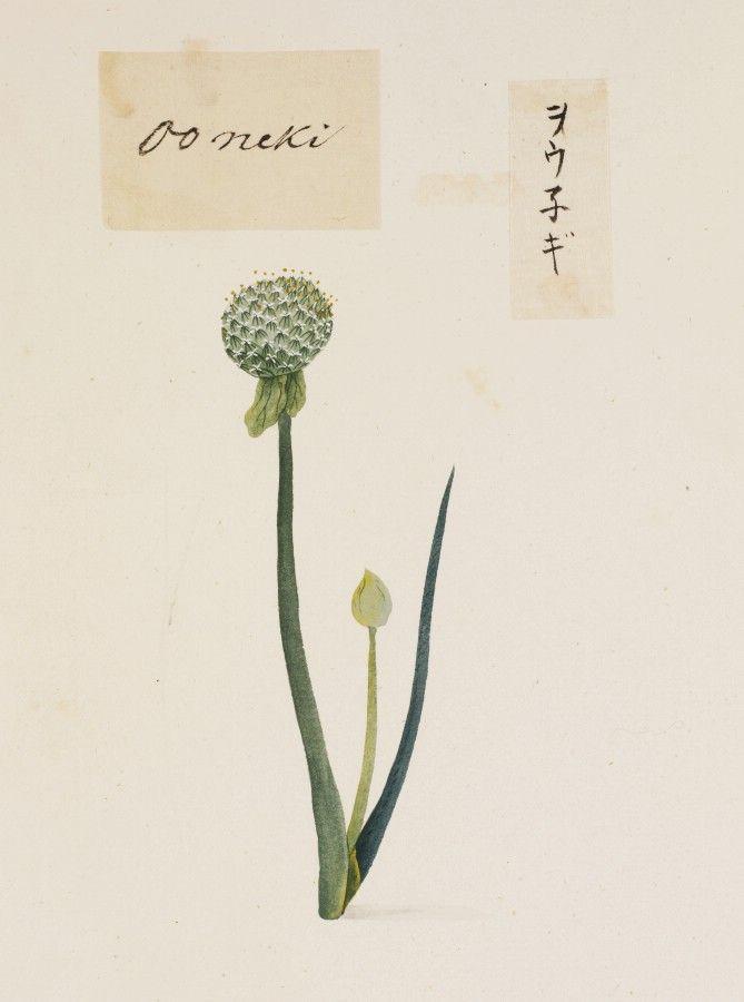川原慶賀の画像 p1_7