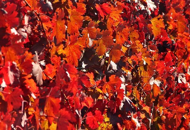 Chile in Autumn