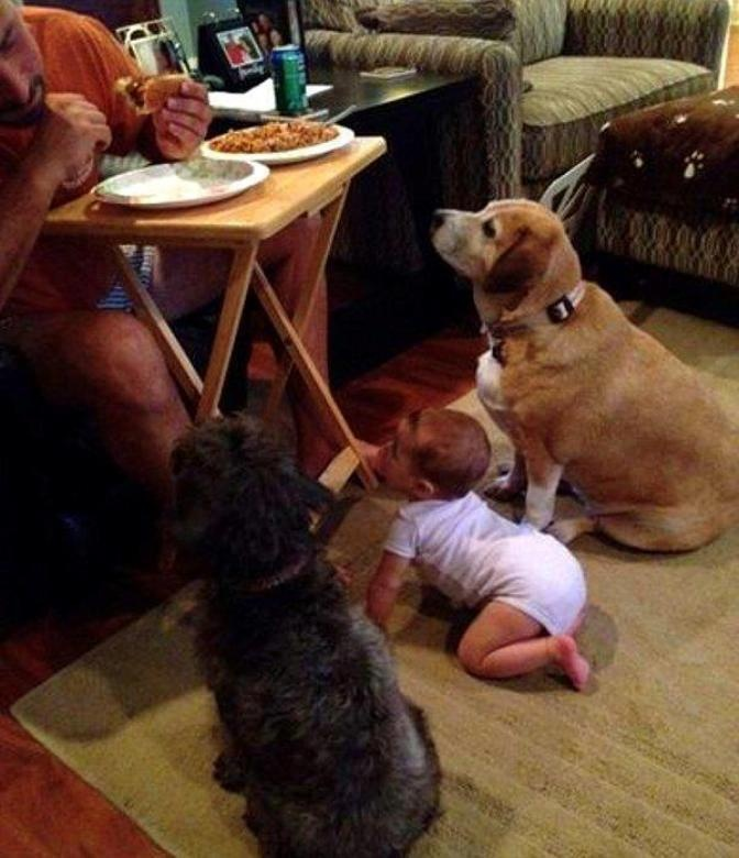 Watcha eating?, funny dog picture, baby and dogs begging