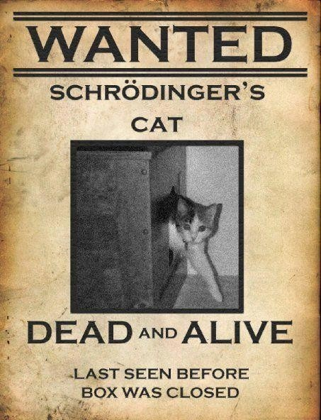 schrodinger 39 s cat this that the other thing pinterest. Black Bedroom Furniture Sets. Home Design Ideas