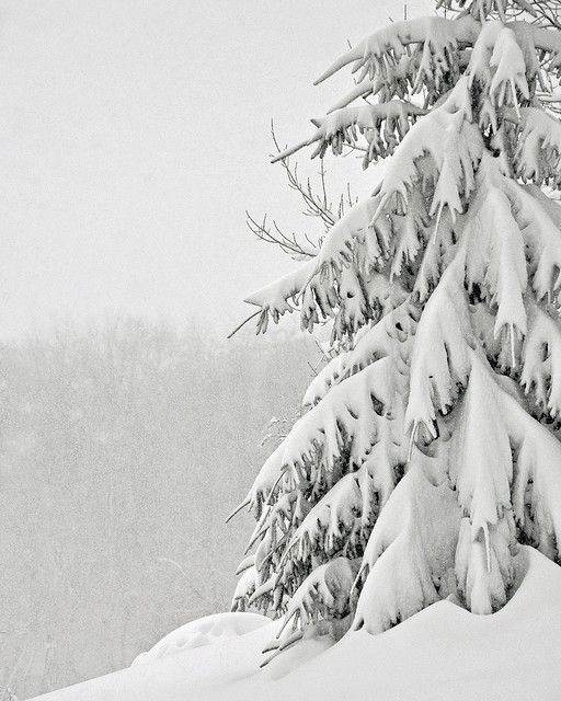 Still Snowing ... http://www.pinterest.com/gewoonik/flowers/