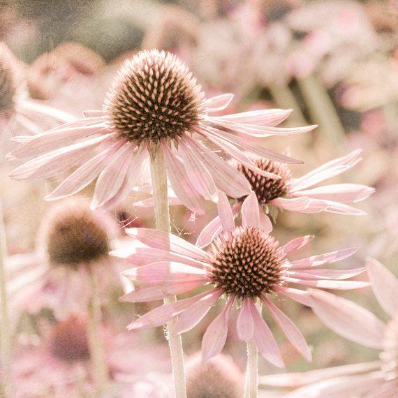 Pastel Pink Summer Flower