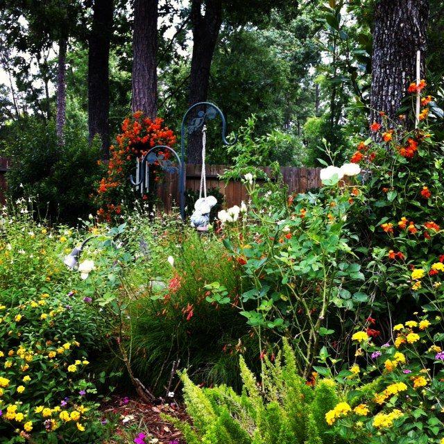Hummingbird Garden Design