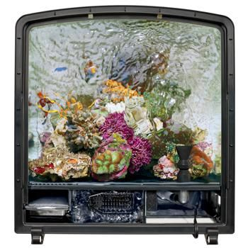 Pin by stacey wells on my pet dreamboard pinterest for Bio cube fish tank