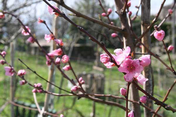 Le prime fioriture di primavera...