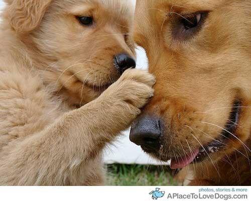 Puppies petting puppies!!!!