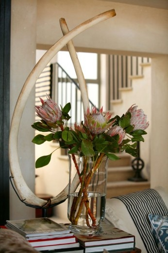 Proteas, whale rib bones, black and white stripes. Interior by John Jacob Interiors