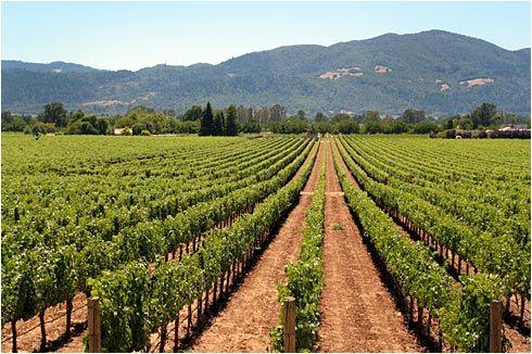 Sonoma, CA. August 2007. Mmmm......wine.
