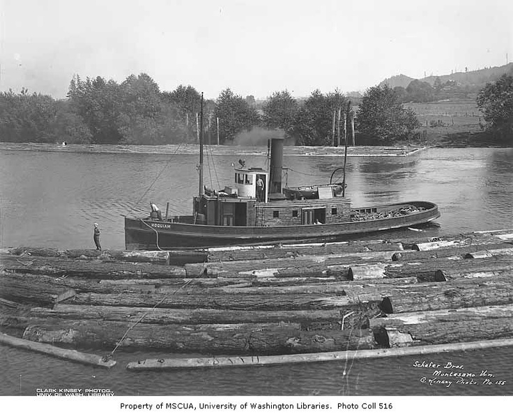 Tug boat and logs floating in river at Montesano, Schafer Brothers Logging Company