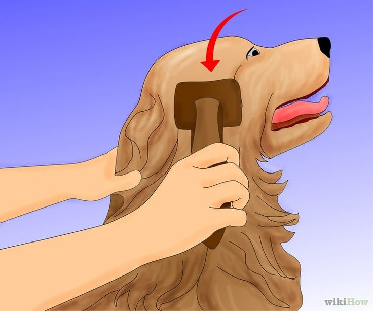 How to groom a dog   d...