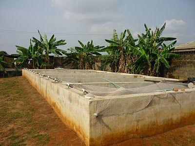 Fish Farming Business in Nigeria