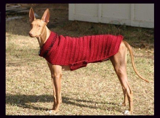 Free Crochet Pattern Greyhound Sweater : Greyhound Sweater My Real First Kid Pinterest