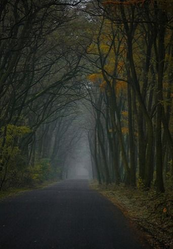 dark places forest trees - photo #48