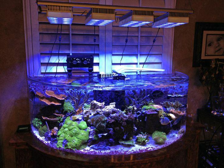 80 gallon aquarium for sale 80 gallon fish tank surrey for Used 300 gallon fish tank for sale