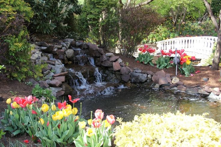 Goldfish pond bridge to waterfall goldfish ponds for Goldfish pond designs