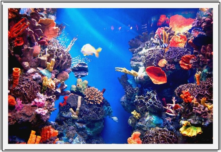 aquarium de Barcelona Cities and Travels Pinterest