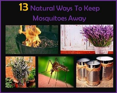 13 natural ways to keep mosquitoes away outdoors pinterest