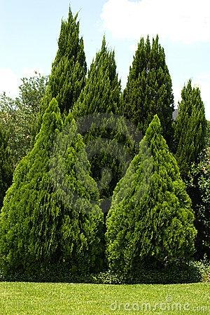 Evergreen Trees Lush Landscape Pinterest