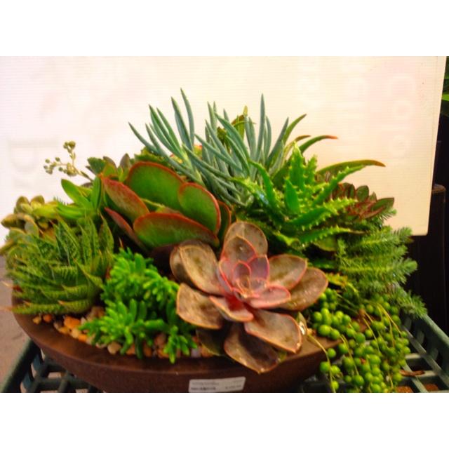Succulent dish garden Garden Gate Pinterest