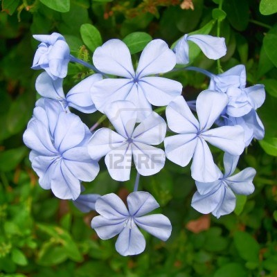 blue jasmine flower car interior design. Black Bedroom Furniture Sets. Home Design Ideas
